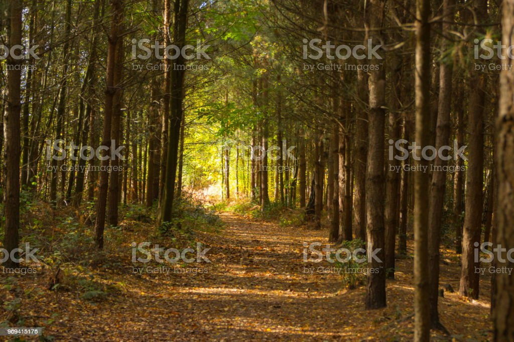 Path through spring forest. stock photo