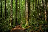 istock Path Through Sunlit Forest 1205214235