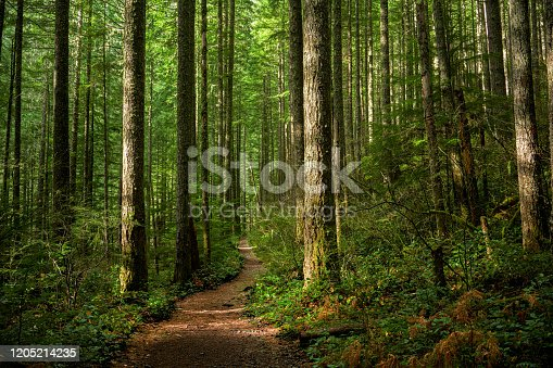 A trail through a sunlit Pacific Northwest forest.