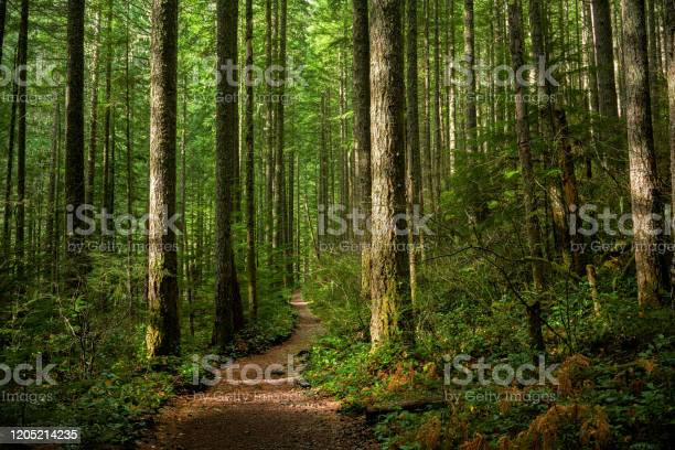 Photo of Path Through Sunlit Forest