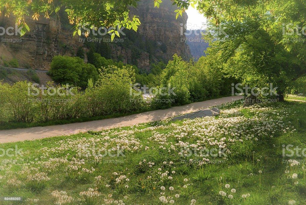 Path through the Canyon Colorado stock photo