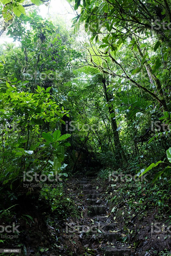 Path through the Cloud Forest of Monteverde Costa Rica stock photo