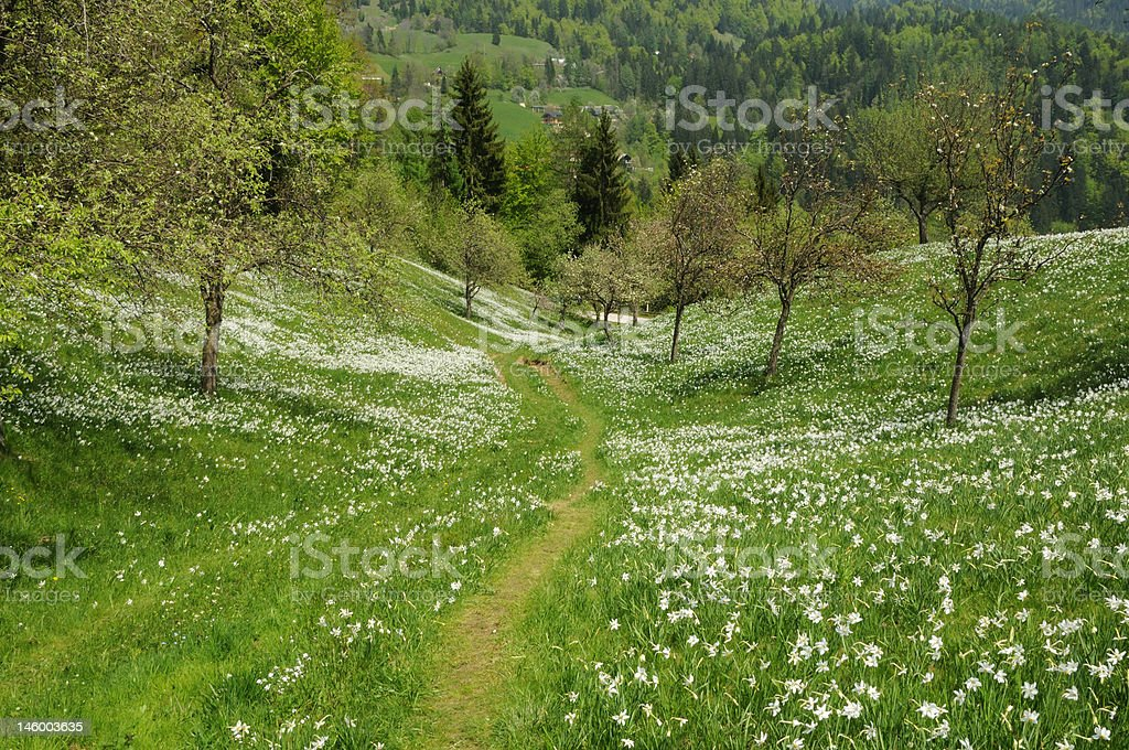 Path through the flowers royalty-free stock photo