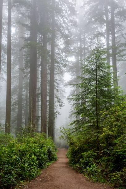 Pfad durch den Wald, Redwood National & State Parks, Kalifornien – Foto