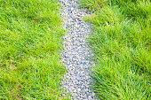 Stones walkway through the grass