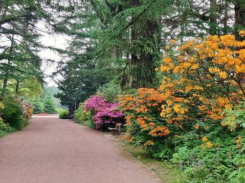 Path through the Hamburg City Park