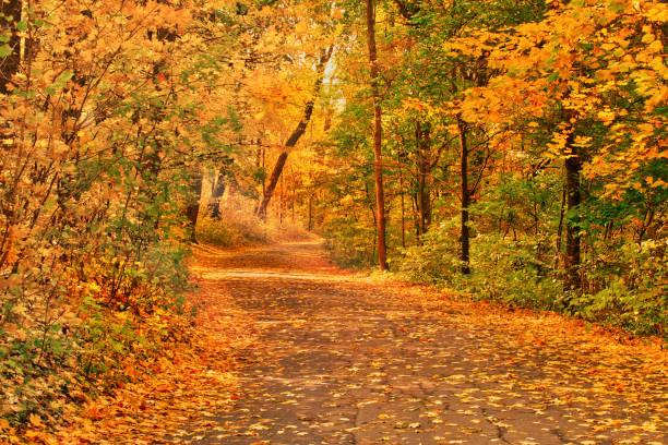 Path through the landscape park on a sunny autumn mornng beautiful picture id1034743386?b=1&k=6&m=1034743386&s=612x612&w=0&h=vtiomnm1wavm5c 7n4xmz38ed3ombva0r6jnw1fflbq=