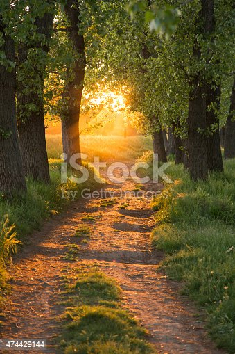istock Path Through The Magic Forest 474429144