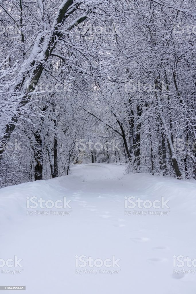 Path through the Woods in Winter stock photo