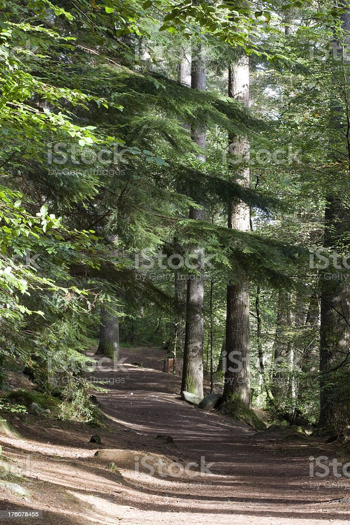 Path through the woods. stock photo