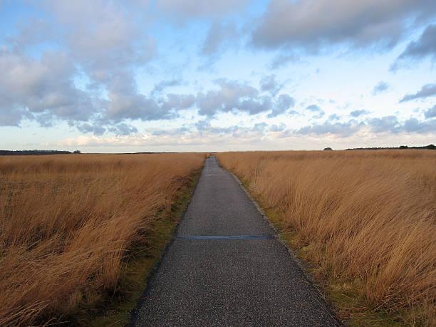 path through veluwe - fsachs78 stockfoto's en -beelden