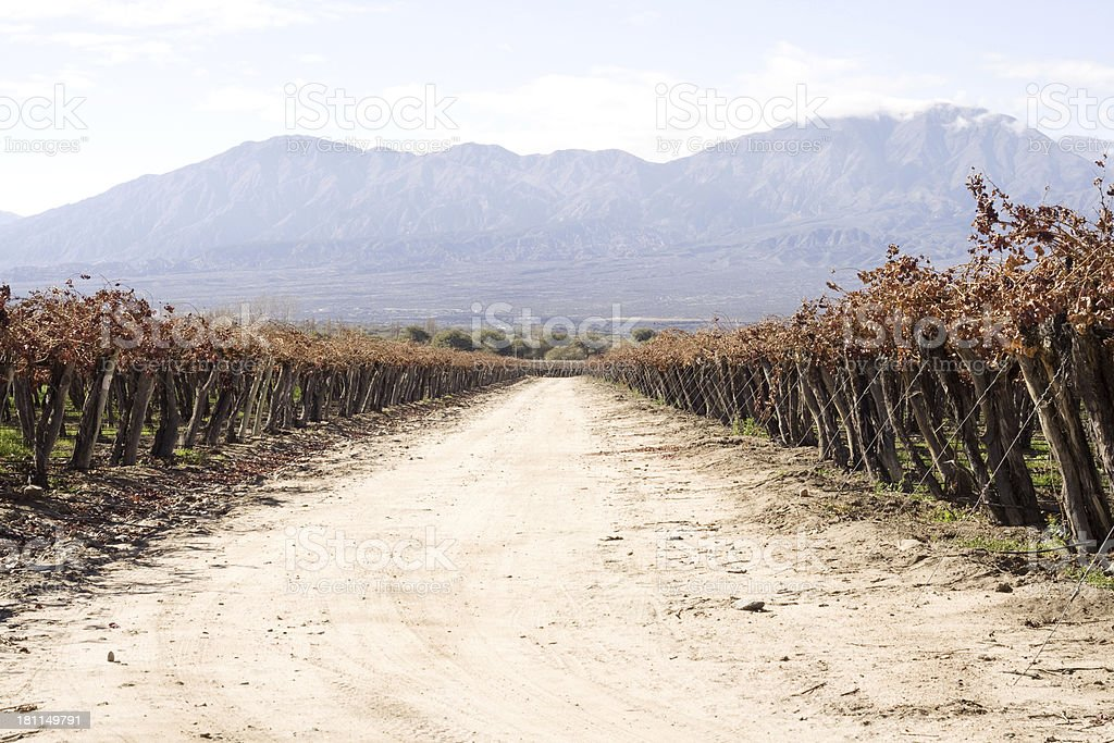 Path through vineyards, Salta province, Argentina royalty-free stock photo