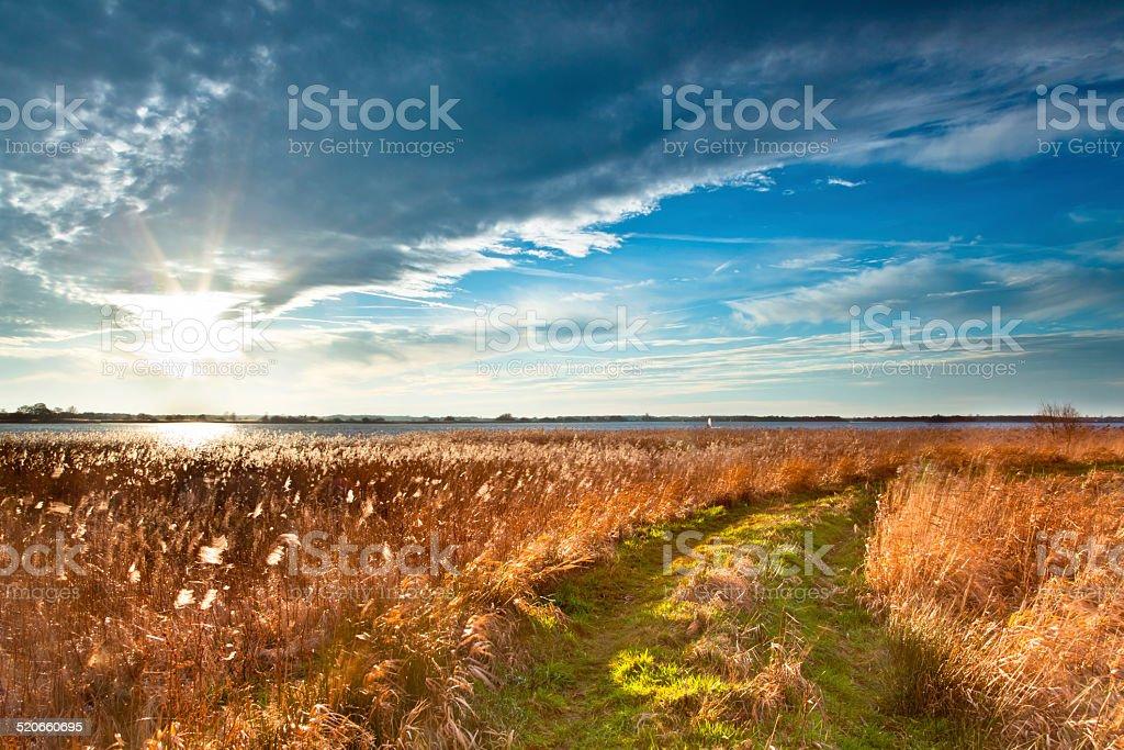 Path through Wild Countryside stock photo