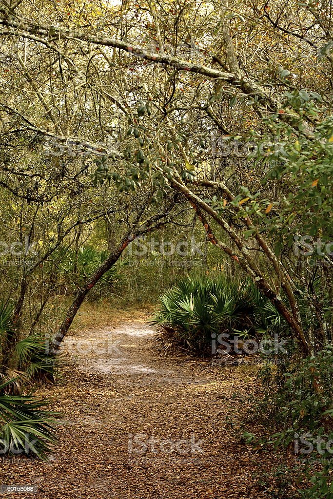 Path through with woods saplings arching over walkway royalty-free stock photo