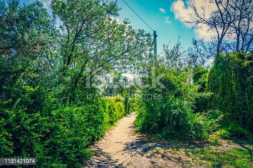 832047798istockphoto Path to a beach 1131421074