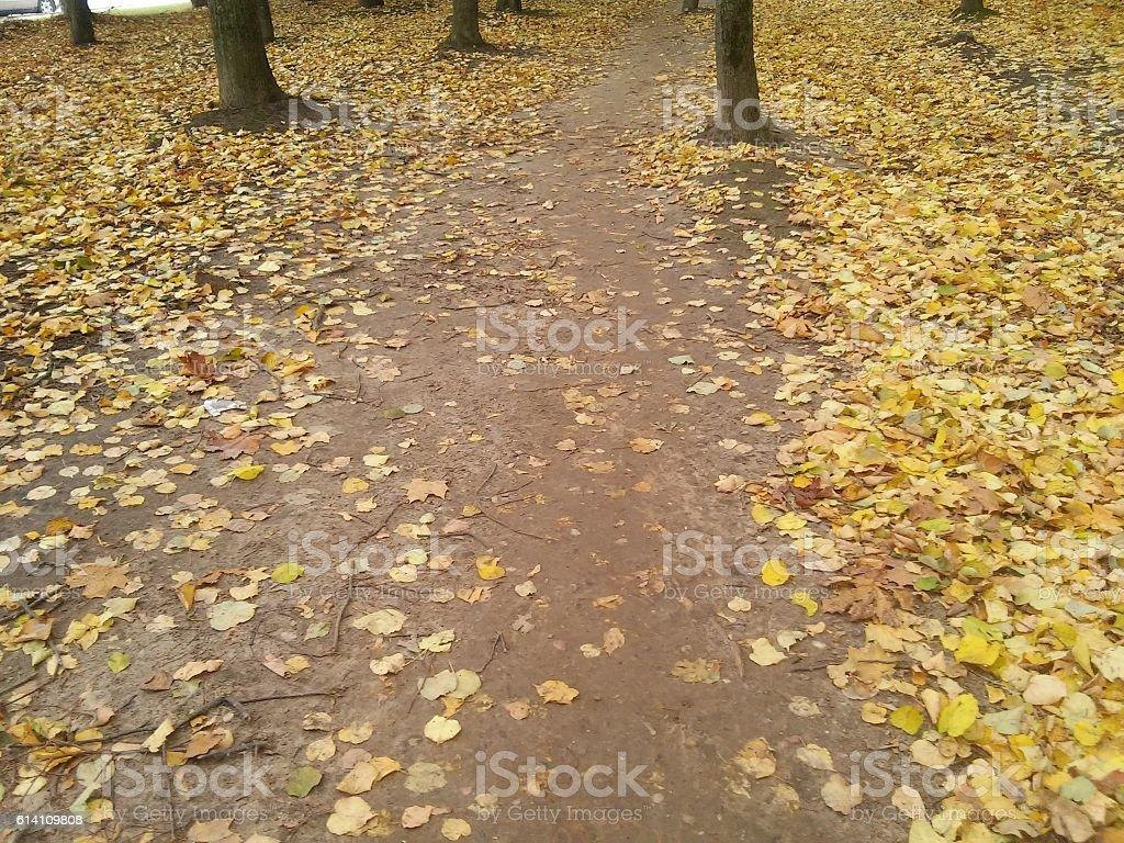 Path to autumn stock photo