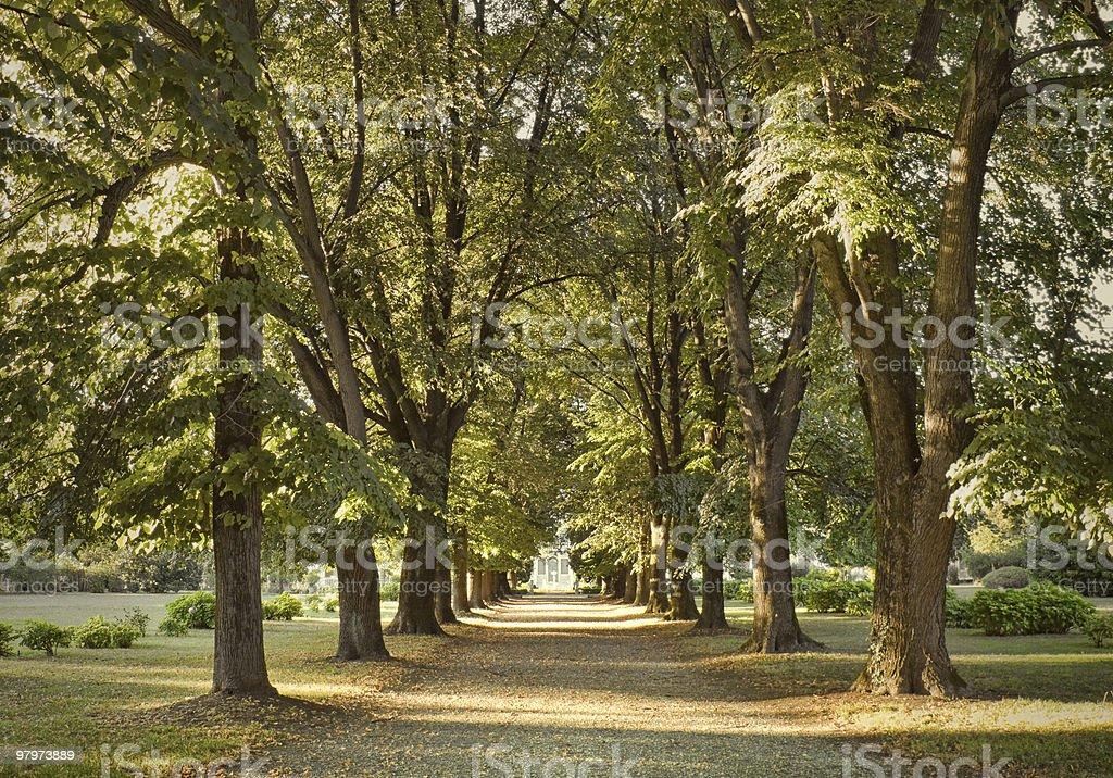 Path to autumn royalty-free stock photo
