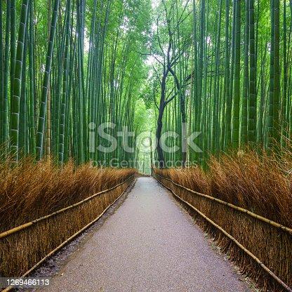 istock Path to bamboo forest, Arashiyama, Kyoto, Japan 1269466113