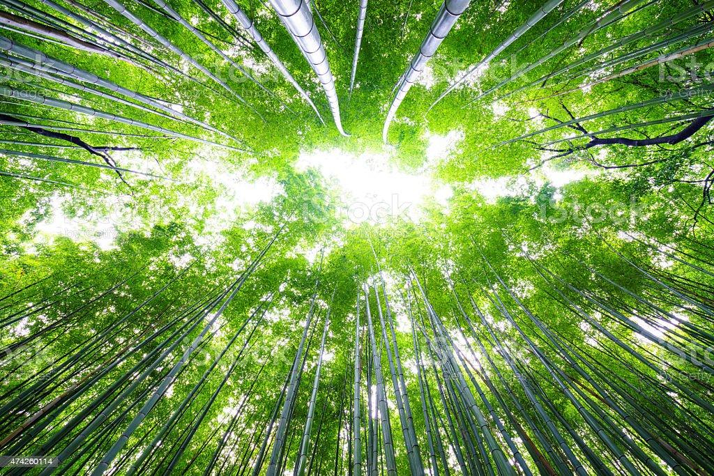 Path to bamboo forest, Arashiyama, Kyoto, Japan stock photo