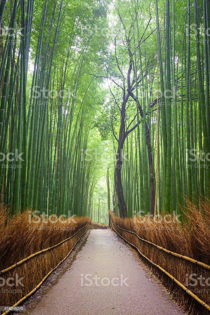 Percorso alla foresta di bambù, Arashiyama, Kyoto, Giappone - foto stock