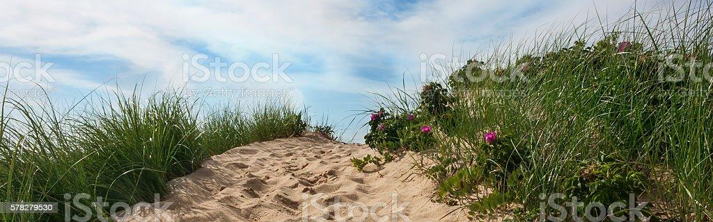 Path to beach Wellfleet Massachusetts on Cape Cod stock photo