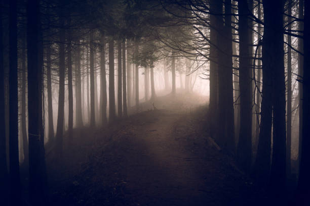 Path to deep mountain Concept of deep thinking mountains in mist stock pictures, royalty-free photos & images