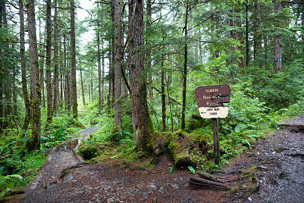 Path to John Muir's cabin Signage to Muir's cabin on Auk Nu Trail in the Tongass National Forest at the fork of two dirt paths leading past mossy trees and logs on a rainy day, Juneau, Alaska, USA national forest stock pictures, royalty-free photos & images