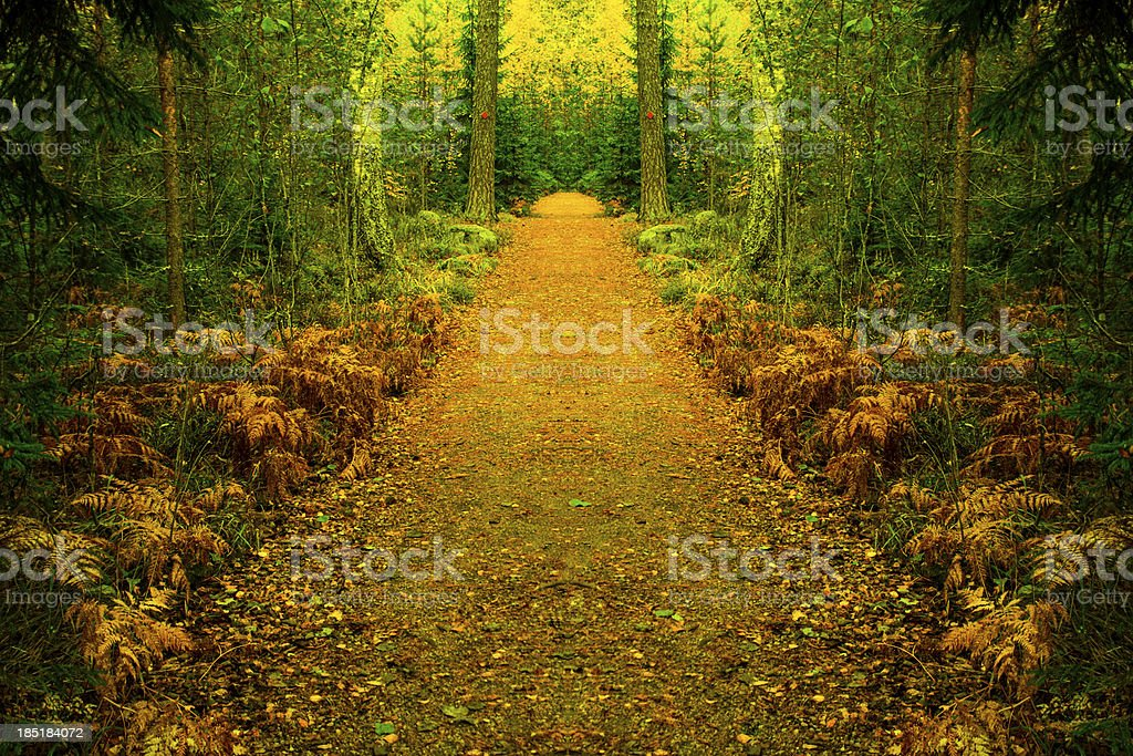 Path to magical forest stock photo