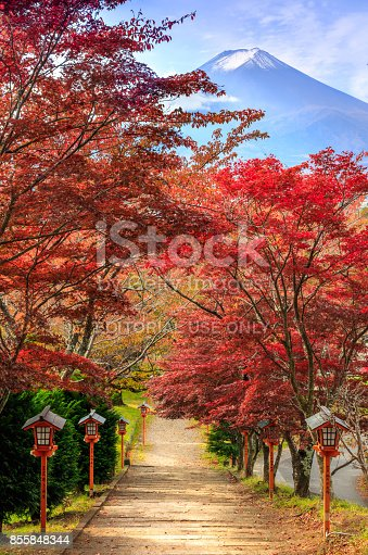 istock Path to Mt. Fuji in autumn, Arakura Sengen Shrine, Fujiyoshida, Japan 855848344