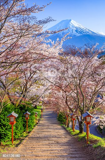 istock Path to Mt. Fuji in spring, Arakura Sengen Shrine, Fujiyoshida, Japan 824126180