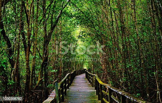 An image of a boardwalk of the mangrove forest in Kota Kinabalu Wetlands. The boardwalk is positioned in the middle of the tall trees.