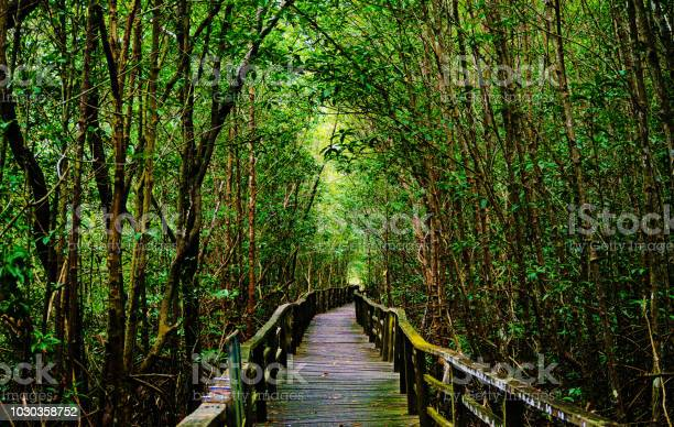 Photo of Path to Paradise