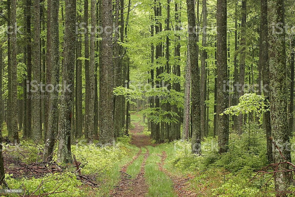 Path to ... royalty-free stock photo