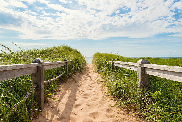 path to the beach at basin head - prince edward island stock photos and pictures