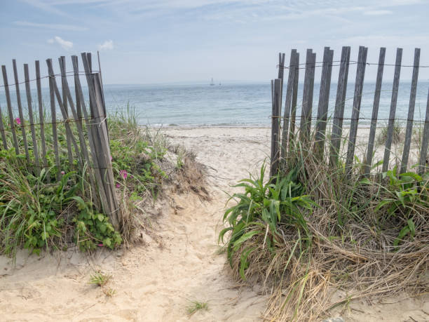 Path to the beach in Cape Cod – Foto