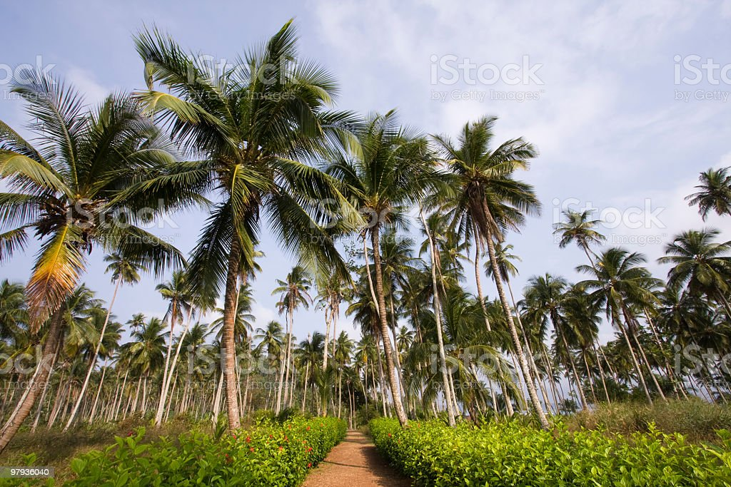 path to the tropical vacation royalty-free stock photo