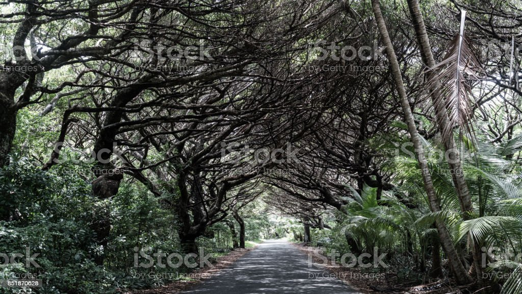 Path under canopy of trees stock photo