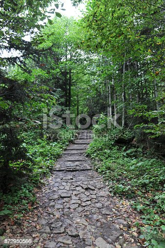 path way in forest and tree roots