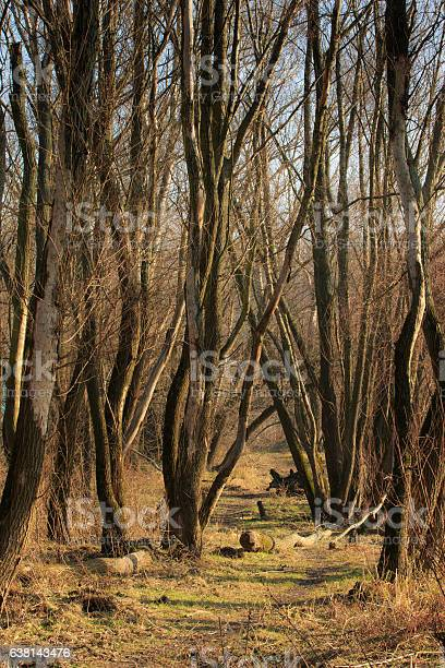 Photo of Path with fallen boughs among brown bare trees