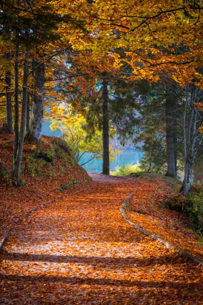Pfad mit vielen Blättern am Laghi Fusine See im Herbst – Foto