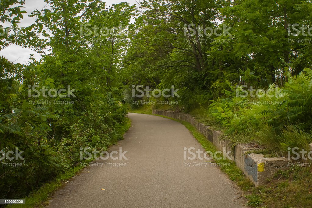 Path with Trees stock photo