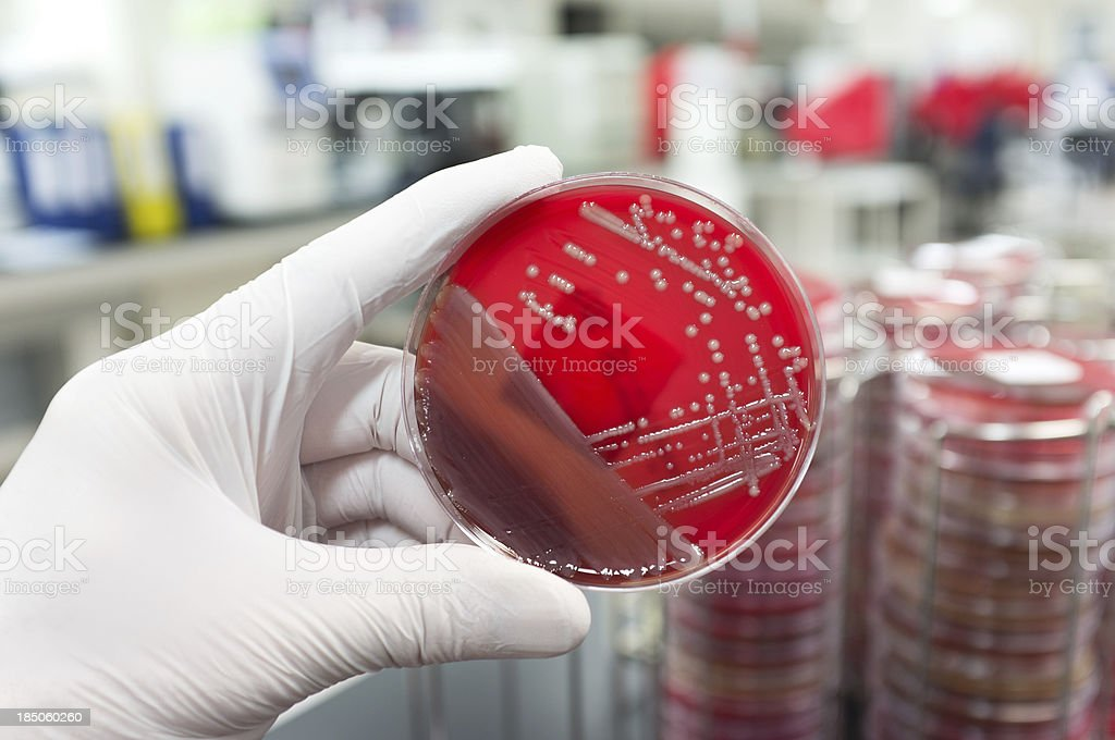 Pathogenic bacteria stock photo