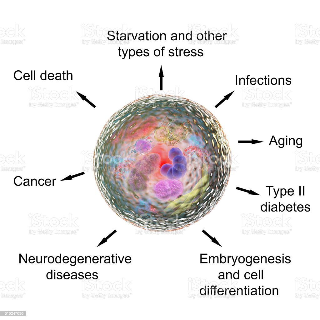 Pathological and physiological functions of autophagy stock photo