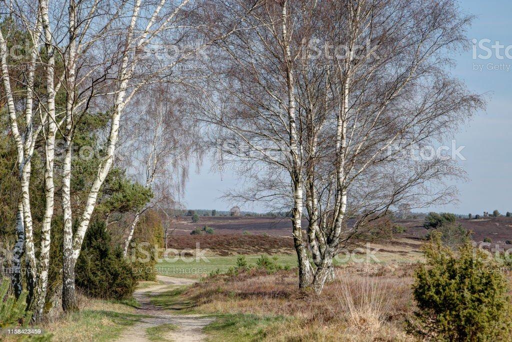 Paths through the Lüneburg Heath - Royalty-free Blue Stock Photo