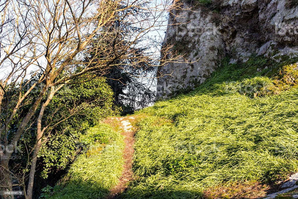 pathway along shrubs and green grass royalty-free stock photo
