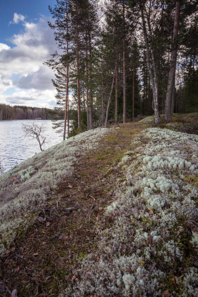 Pathway by the lake with lichen on the ground stock photo
