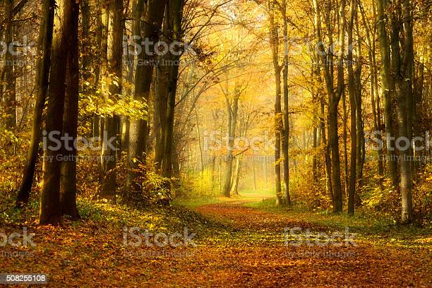 Photo of Pathway Covered by Leafs through Colourful Forest in Autumn