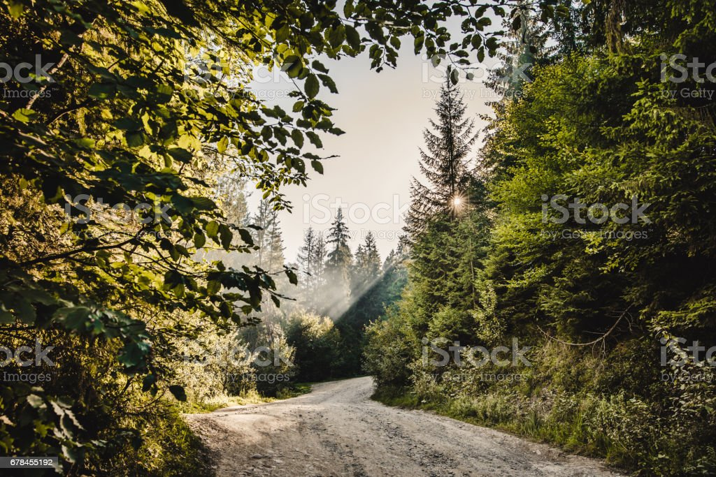 pathway in a forest royalty-free stock photo