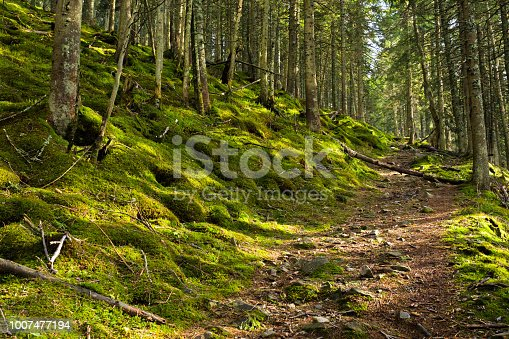 Pathway in a green spring forest in mountains