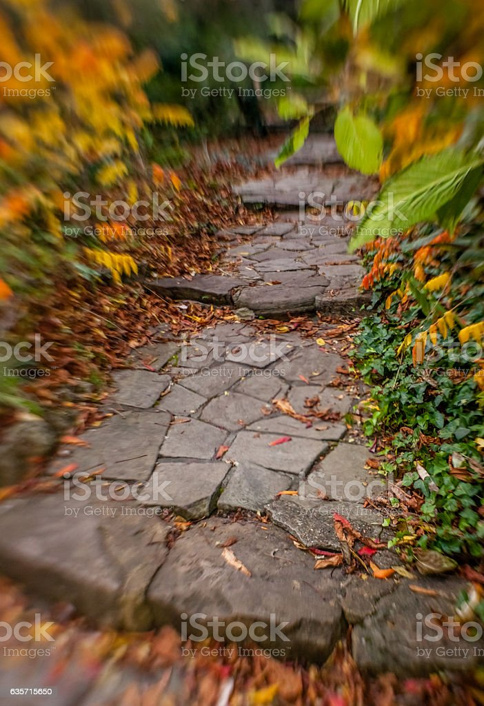Pathway in a park in autumn royalty-free stock photo